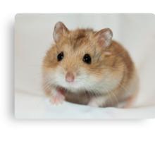 Dwarf Hamster Black Eyed Argente Canvas Print