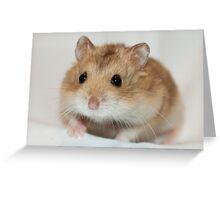 Dwarf Hamster Black Eyed Argente Greeting Card