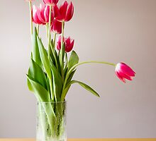 Tulips in a vase by sc-images