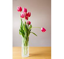 Tulips in a vase Photographic Print