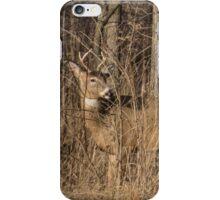 Deer Buck On Alert iPhone Case/Skin