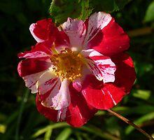 My Rose by WildestArt