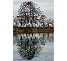 Of Mirrors and Trees Photographic Print