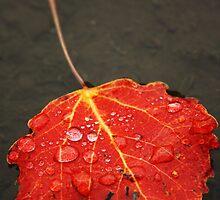 Autumn Yet Again by Alex Ottosson