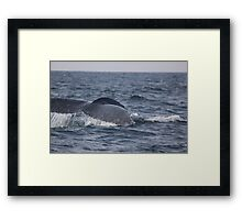 Diving Deep! Framed Print