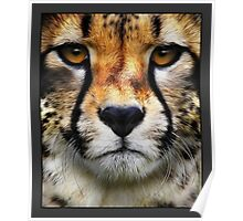 Airbrushed Cheetah - Wildlife Portraits. This gallery is being updated on a regular basis. Poster