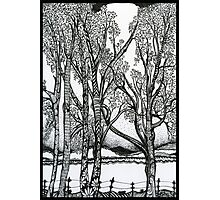 Farm Trees, An Ink Drawing Photographic Print