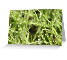 Dew on New Grass Greeting Card