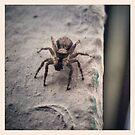 mr.spider by sparkleshine