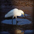 tidal bird by sparkleshine