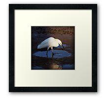 tidal bird Framed Print