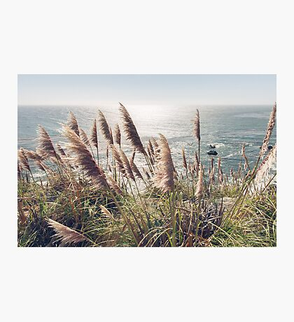 Reed, Wind & Ocean Photographic Print
