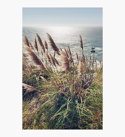Reed Blowing in Wind by Ocean Photographic Print