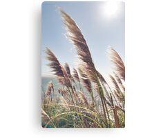 Reed Blowing in Wind by Ocean Canvas Print