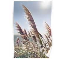 Reed Blowing in Wind by Ocean Poster