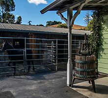 At the Cooper-Garrod Estate Vineyards by James Watkins