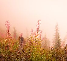 In the Mist of Autumn by Satom M Chhim