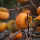 Persimmon by craziwolf