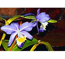 Pond orchids Photographic Print
