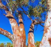 River Red Gum Branches by Stephen Swayne
