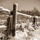 Fence Post by Tony Shaw