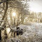 Winter Sunrise  by Tony Shaw