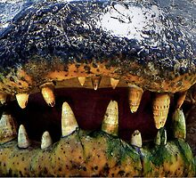 Gator's Teeth  by Savannah Gibbs