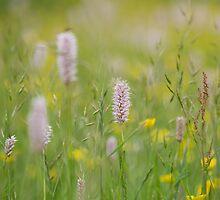Summer meadow flowers by Judi Lion