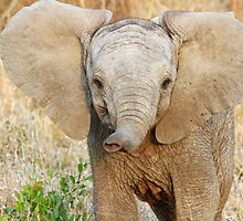 I am a brave little elephant! by jozi1