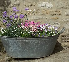 Flowers in a tub by Judi Lion