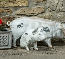 Two little piggies by Judi Lion