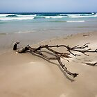 Driftwood by halans