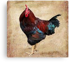 Rhode Island Red Canvas Print