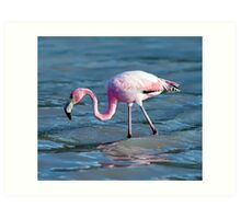 Hunting flamingo Art Print