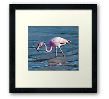 Hunting flamingo Framed Print