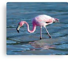 Hunting flamingo Canvas Print