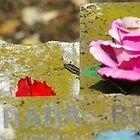 flashes of colour (grave with lizard) by lukasdf