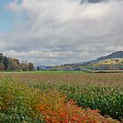Fall in Vermont/New Hampshire by AnnDixon
