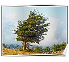 Lonely Cedar Poster