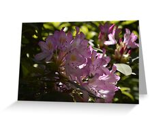 Flower Blooms Greeting Card