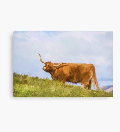 Highland Cow Watercolour Canvas Print