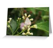 Small Gray Butterfly Greeting Card