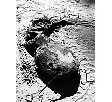 Morbid Curiosity Photographic Print