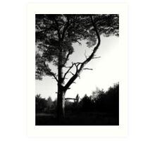 Lonely Tree at Thetford Forest Art Print