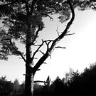 Lonely Tree at Thetford Forest by Emerald-Cat