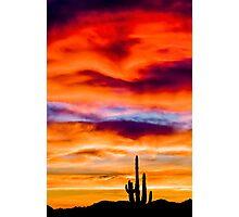 Cactus Sunset Photographic Print
