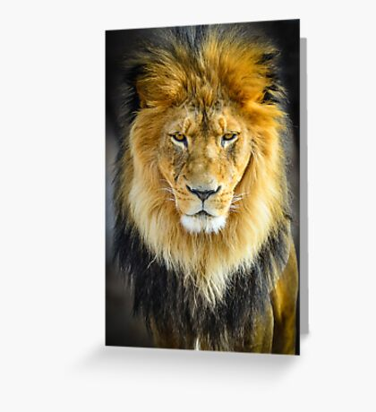 Male Lion with Intimidating Stare Greeting Card