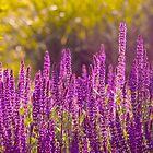 Purple Flowers by Photopa