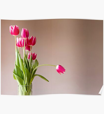 Glass vase with bunch of pink tulips Poster
