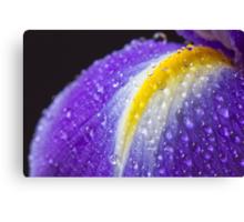 Close up image of purple iris Canvas Print